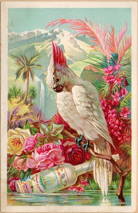 birdandboose (455x700, 331Kb)