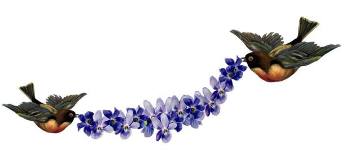 birds-violetes (700x326, 28Kb)