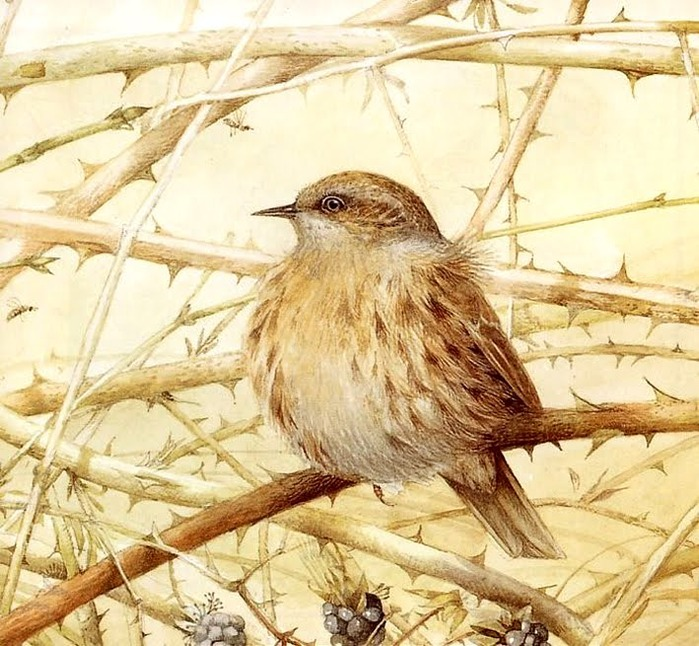 ilustración vintage. pájaro.- (700x646, 151Kb)