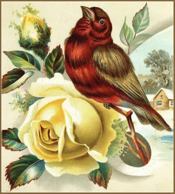 lbb bird on rose (578x640, 136Kb)