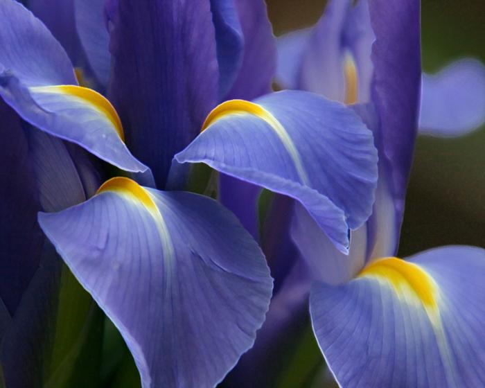 Цветы список с картинками 2