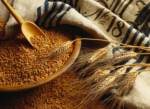 wheatgrains (485x352, 71Kb)