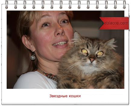 звездные кошки/3518263__2_ (434x352, 188Kb)
