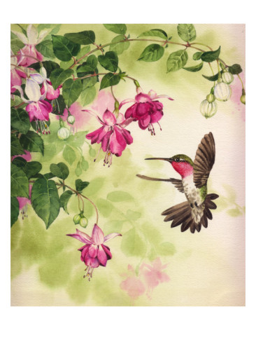 hummingbird-with-flowers (366x488, 54Kb)
