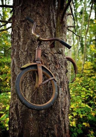 велодерево (336x480, 47Kb)