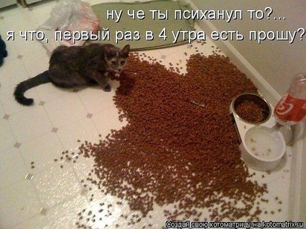 3400156_x_3705aa5a (604x453, 104Kb)