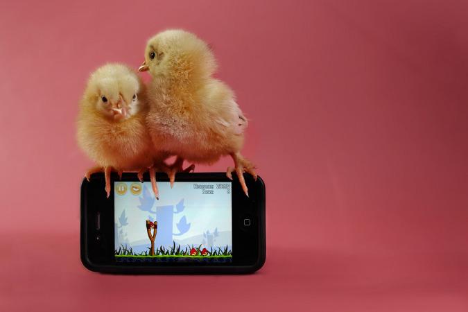 пасхальные цыплята фото