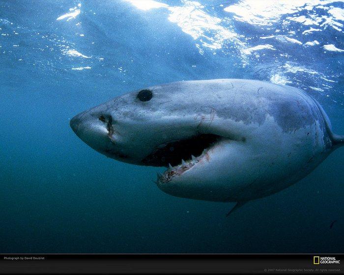 Этот удивительный подводный мир фото