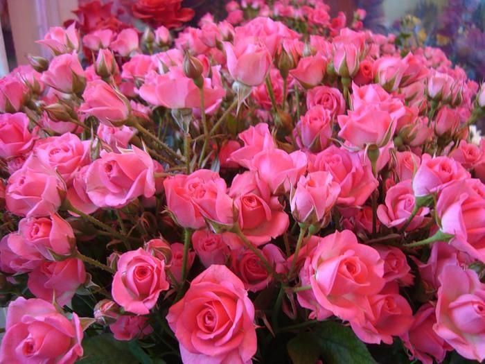 Что шепчут розы по утру,...
