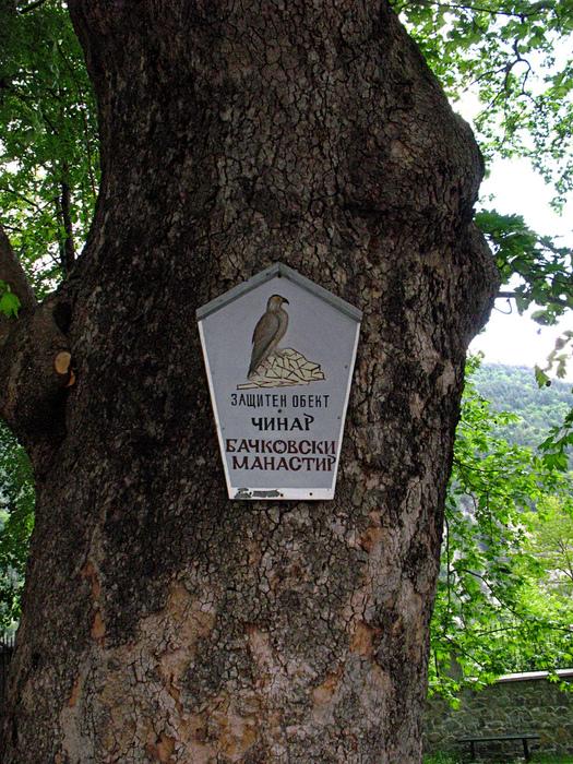 Бачковский монастырь 85992