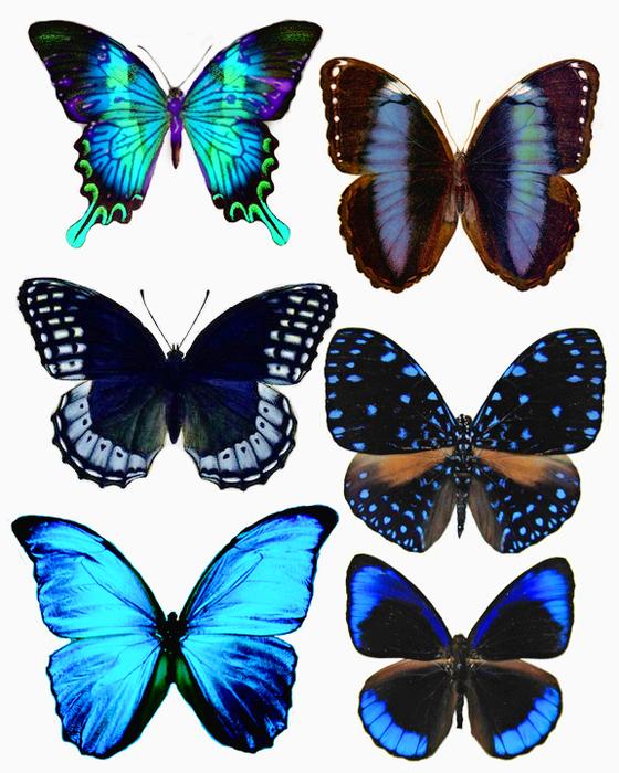 1278202282_55_FT838_blue_butterflies (560x700, 408Kb)