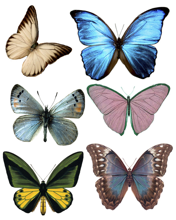 1284492422_55_FT838_sirlydoos_october_kit_butterflies_ii (560x700, 325Kb)