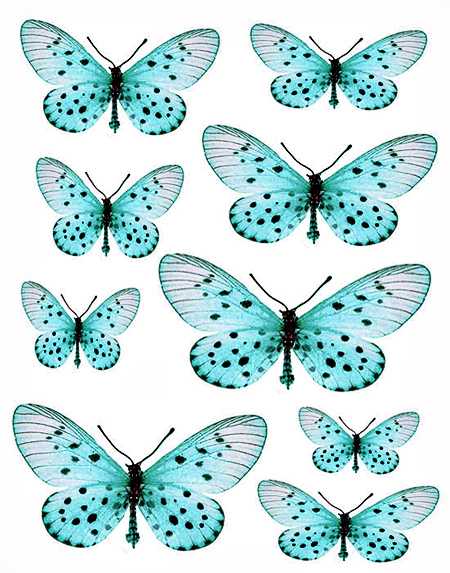 1288184625_55_FT838_websters_butterflies_blue (450x573, 321Kb)
