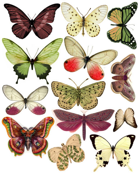 1289162330_55_FT838_swirlydoos_december_kit_butterflies_2010 (481x598, 126Kb)