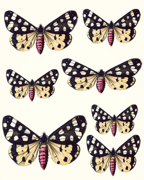 1291841378_55_FT838_curio_butterflies (476x595, 275Kb)