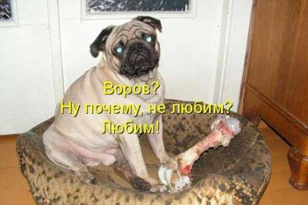 85066614_rga4ru_prikol_016.jpg