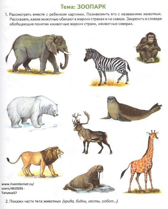 Картинки для детей зоопарка