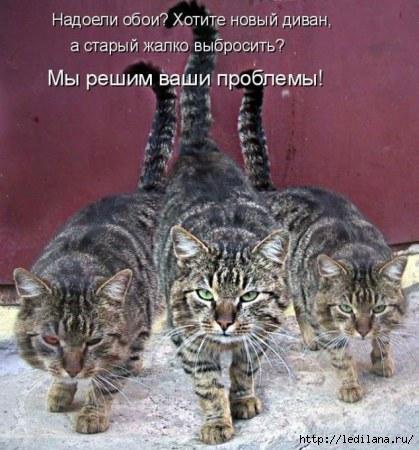 коты (419x450, 126Kb)