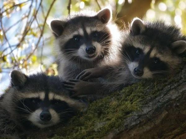 Улыбнуло смешные животные - апрельская подборка 14 (600x449, 59Kb)
