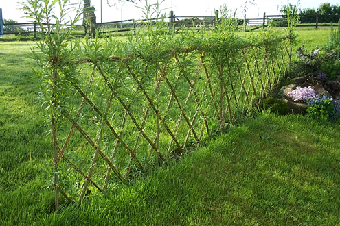 willow_screen_fence (495x330, 279Kb)