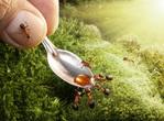 Превью муравьи4 (640x472, 156Kb)