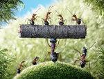 Превью муравьи8 (640x492, 138Kb)