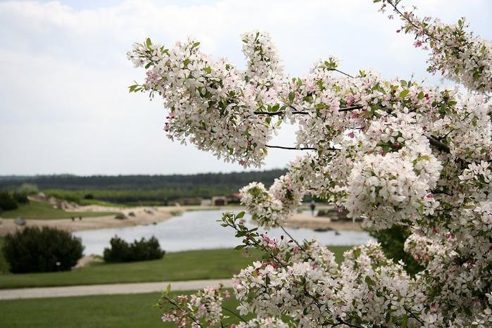 Сад камней Нохтен - Lausitzer Findlingspark Nochten 15616