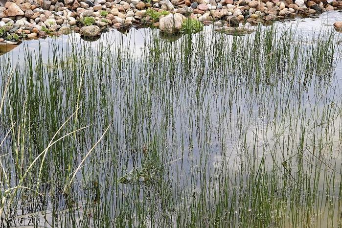 Сад камней Нохтен - Lausitzer Findlingspark Nochten 79403