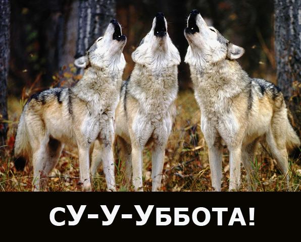 суббота/4348076_SYBBOTA (596x480, 134Kb)