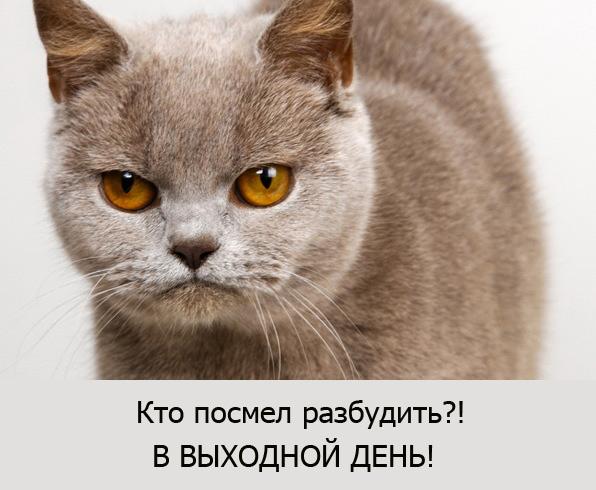 котэ разбудили/4348076_razbydit (596x490, 87Kb)