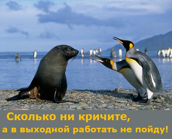 выходной/4348076_nerabotau (596x480, 116Kb)
