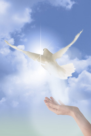 reiki_peaceful_spirit_dove (300x450, 23Kb)