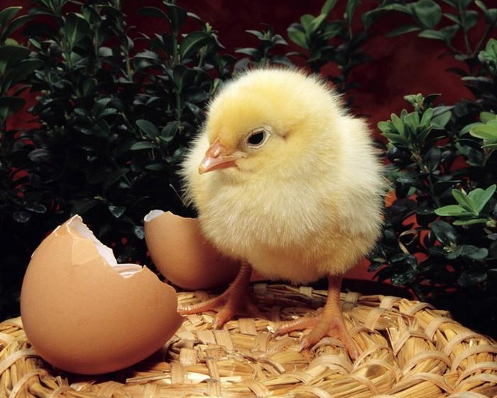 50+ Оригинальные пасхальные яйца 43 (700x560, 105Kb)