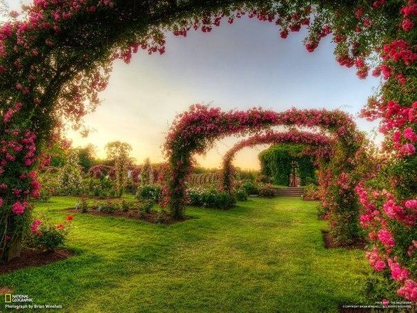 3303834_elizabeth_park_rose_garden (604x453, 101Kb)