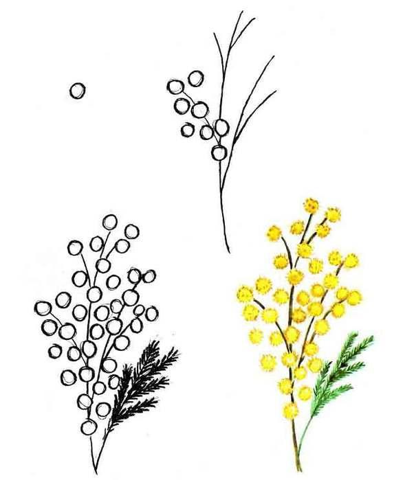 3200659_risovanie_mimoza (573x700, 30Kb)