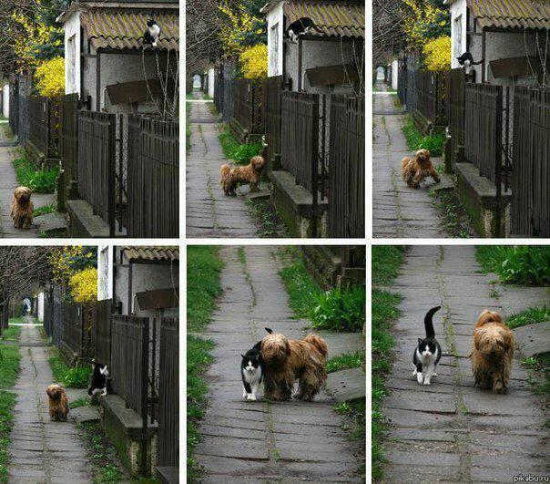 друзья - кот и пес (604x531, 82Kb)