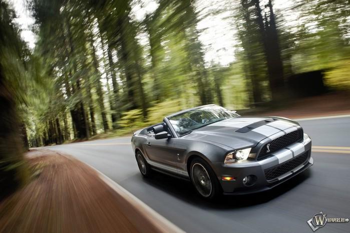 Shelby 1000 новая реинкарнация легендарной модели Ford Shelby gt500 Super Snake 1 (700x466, 90Kb)