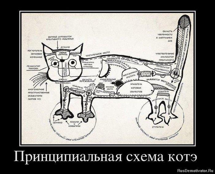 1322223302_530815_printsipialnaya-shema-kote- (700x567, 91Kb)