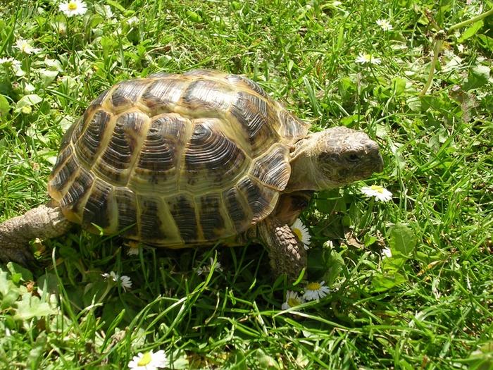 интересная притча о черепахе/3185107_cherepaha (700x525, 415Kb)