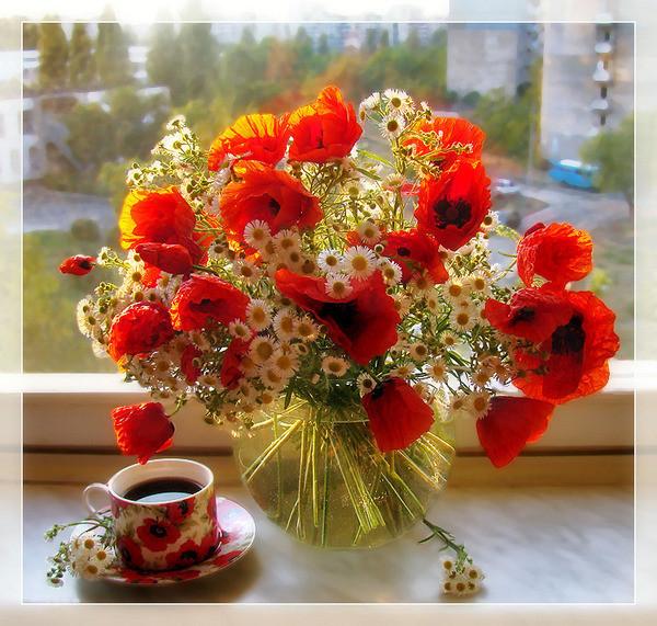 цветы маки ромашки!!! (600x571, 163Kb)