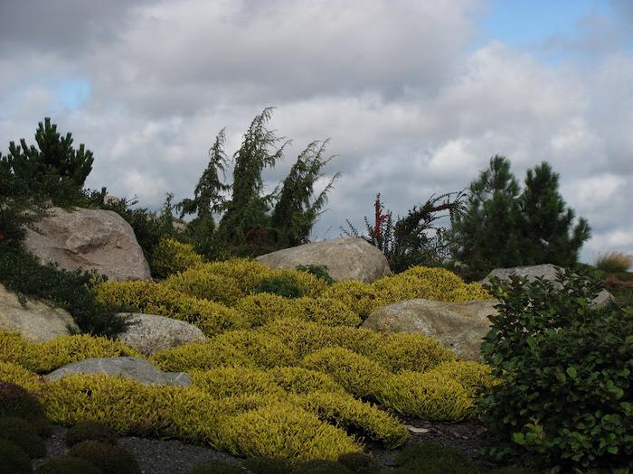 Сад камней Нохтен - Lausitzer Findlingspark Nochten 52234