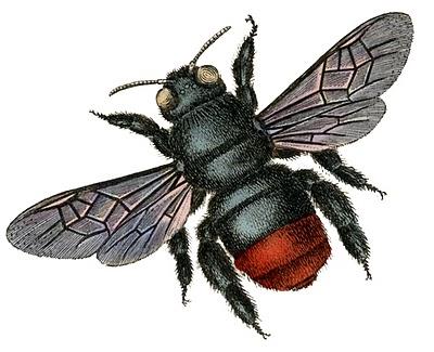 bee vintage image graphicsfairy2bg (400x325, 45Kb)