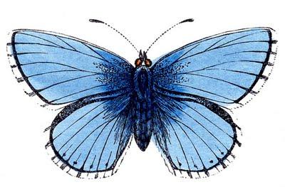 butterflies blue clip art--graphicsfairy007a (400x263, 29Kb)