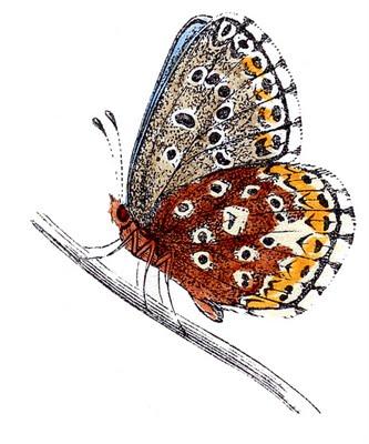 butterflies blue clip art--graphicsfairy007c (333x400, 41Kb)