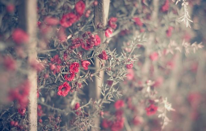 Ванильные фото от Rachel Bellinsky 44 (700x446, 72Kb)