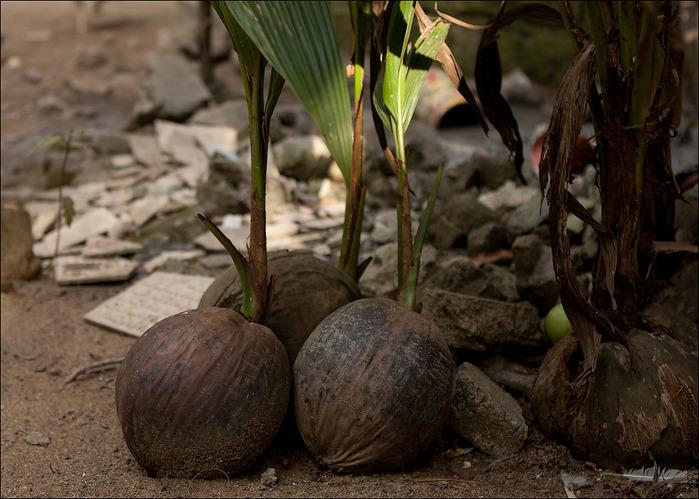 кокосовая расскада (700x499, 137Kb)