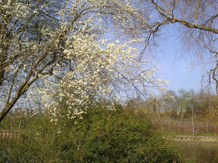 22-03-2012 002 (700x525, 186Kb)