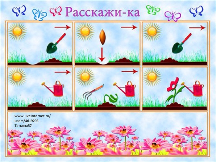 Как растёт цветок