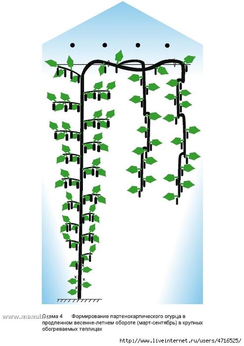 растения | Записи в рубрике