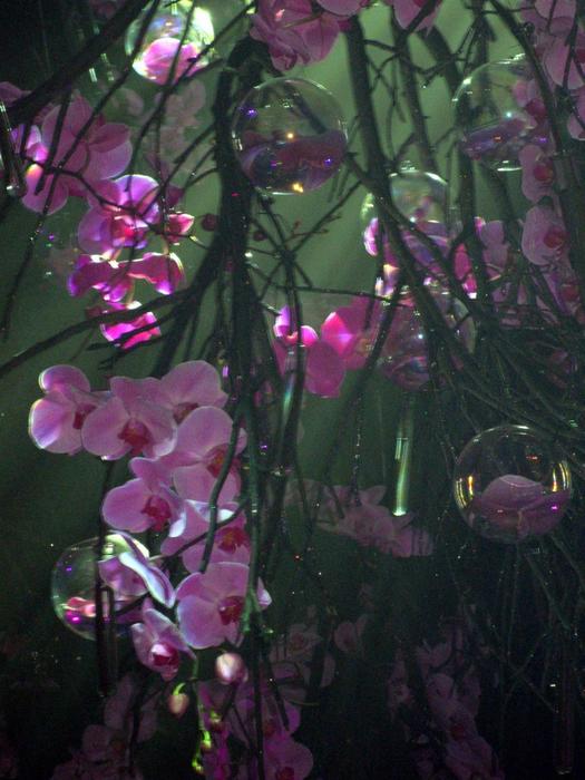 tn_Выставка цветов 078 (525x700, 491Kb)